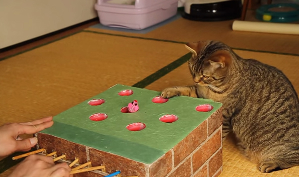 cat plays whack-a-mole